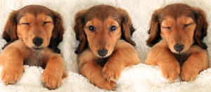 Anne Arundel County Pet Boarding, Millersville Pet Grooming